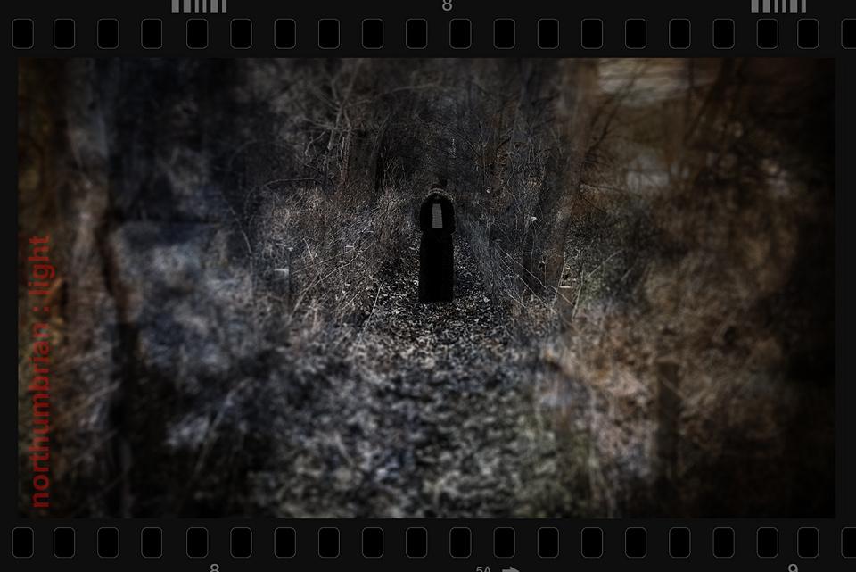 windows photo gallery updates download 3XqxGLT