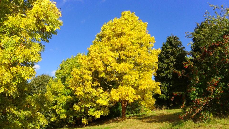 autumn trees looking good dotsnaps blipfoto