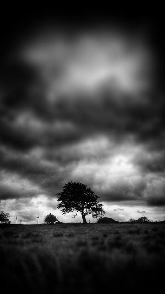 Moody Tree | FrayBob | Blipfoto