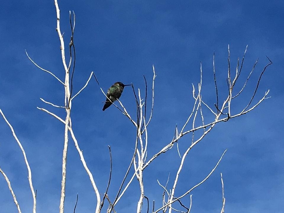 Tiny Hummingbird   carolinav   Blipfoto
